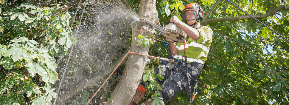 Fully accredited by the Arboricultural Association