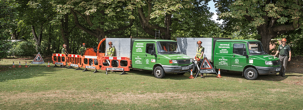 A full range of tree surgery services from tree removal to hedge trimming