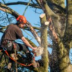 Tree Surgeon Cirencester