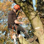 Tree Surgeon Tewksbury