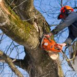 Tree Surgeon Cheltenham