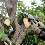Tree Felling Gloucester