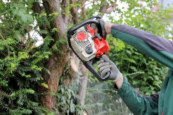 Tree Felling Gloucestershire