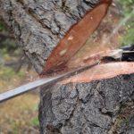 Tree Cutting Gloucester