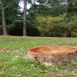 Tree Stump Removal Gloucestershire