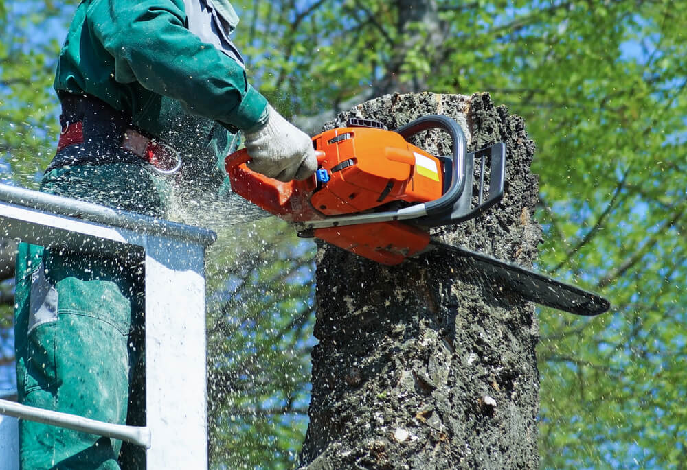 Tree Cutting Gloucestershire
