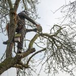 Tree Surgeon Gloucester