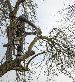 Tree Surgeon Gloucester