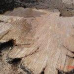 Tree stump removal tewkesbury