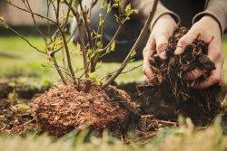Tree Care Tips