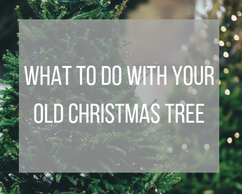 what to do with your old christmas tree