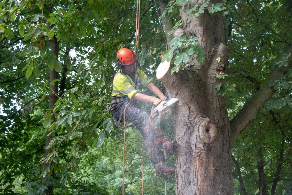 Adam working on tree