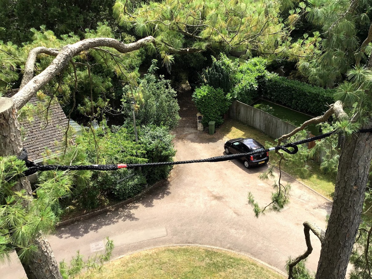 tree removal in process