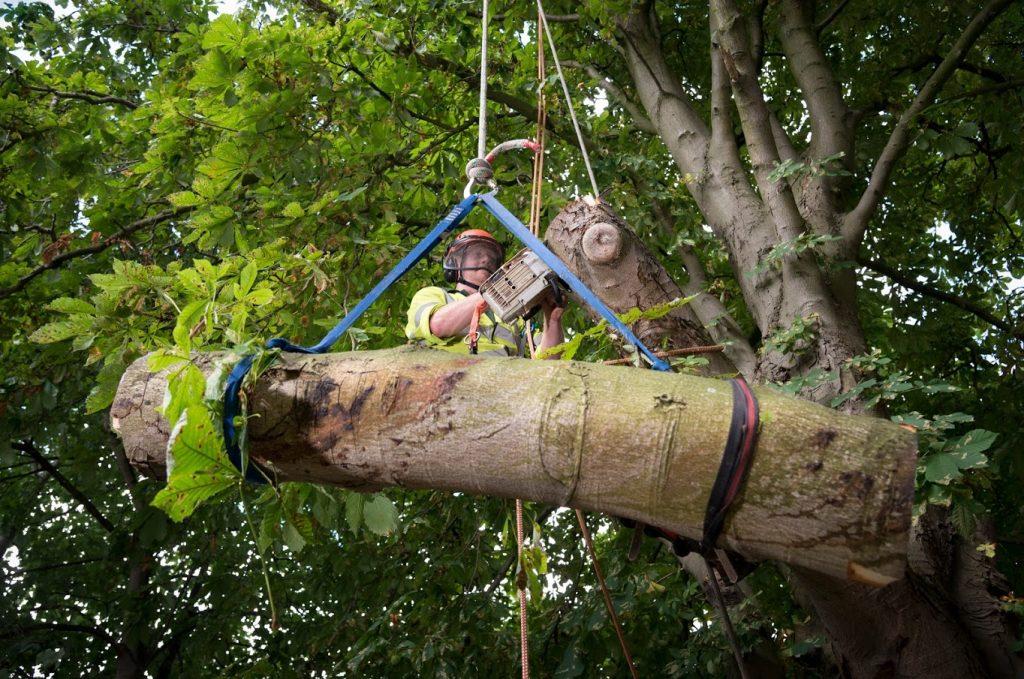 lowering tree branch