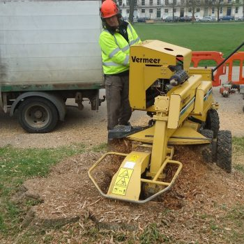 Large stump removal at Montpellier Park