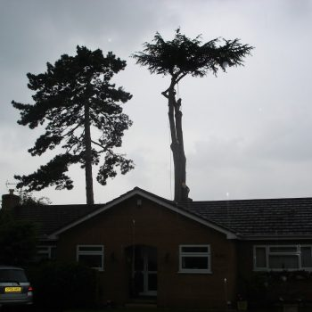 Cedar - With the top left to remove