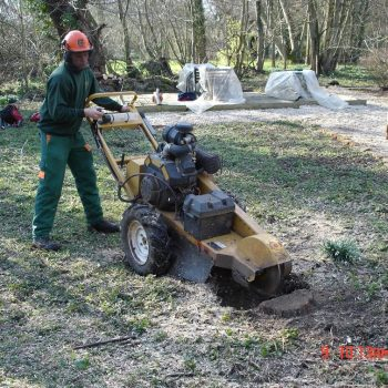 Willow stump removal