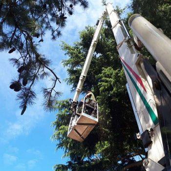 #5 Mobile Elevated Working Platform (MEWP)